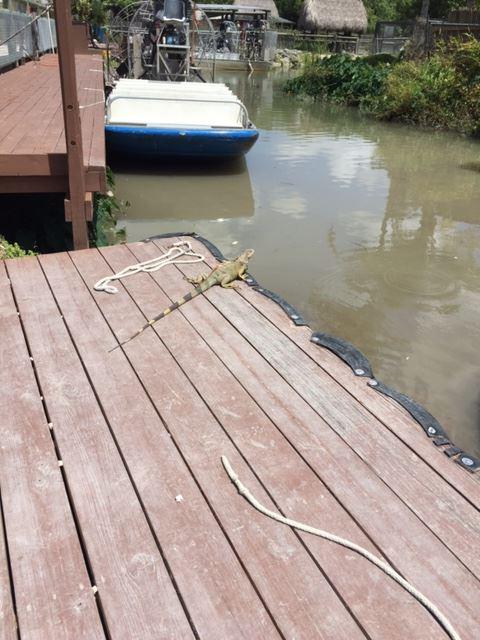 Everglades Alligator Farm - Homestead Surroundings