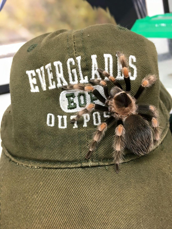 Everglades Outpost - Homestead Contemporary