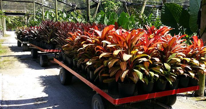 Excelsa Gardens Nursery - Loxahatchee Informative