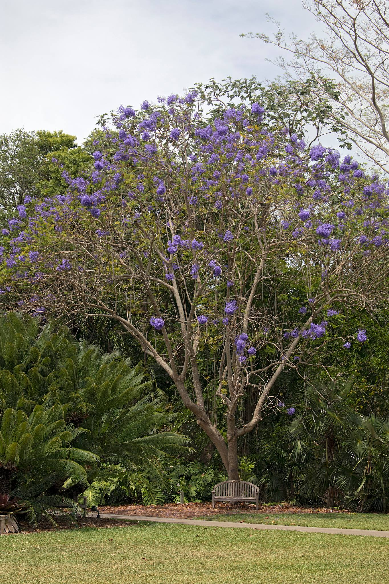 Fairchild Tropical Botanic Garden | crop farm