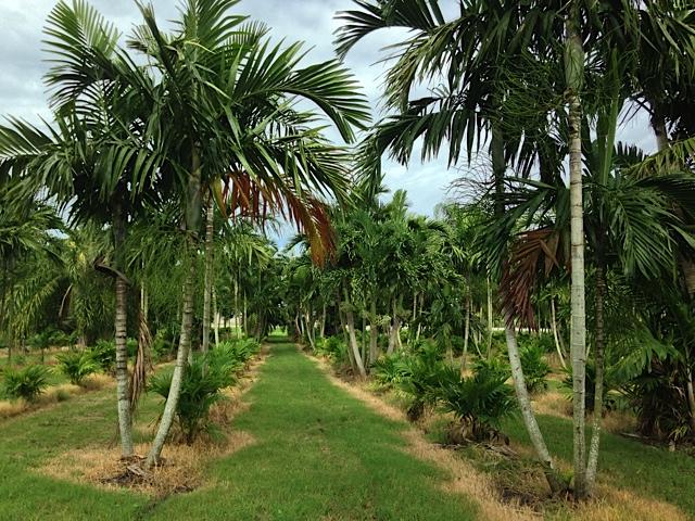 Pahokee Palms - Pahokee Webpagedepot
