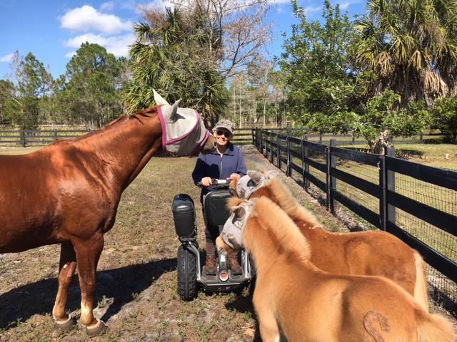 Palm Beach Equine Clinic - Wellington Establishment