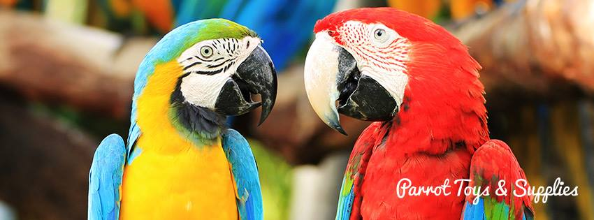 Parrot Toys and Supplies - Lake Worth Webpagedepot
