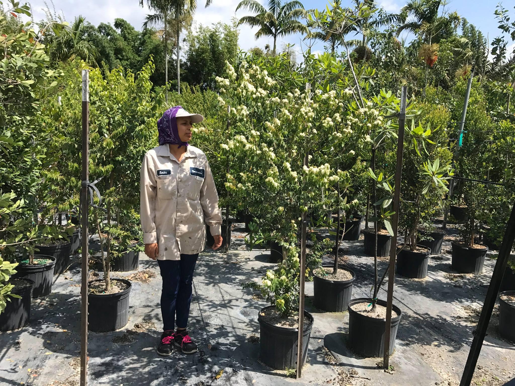 Plant Creations - Homestead Establishment
