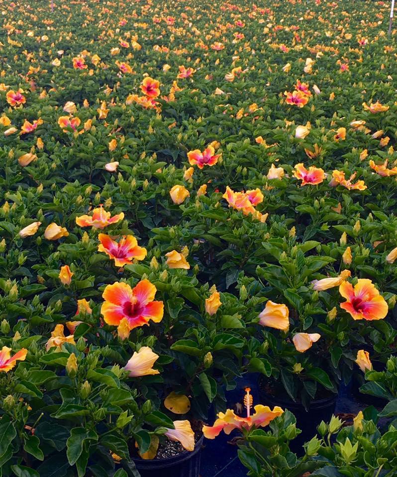 Power Bloom Farms - Homestead Convenience