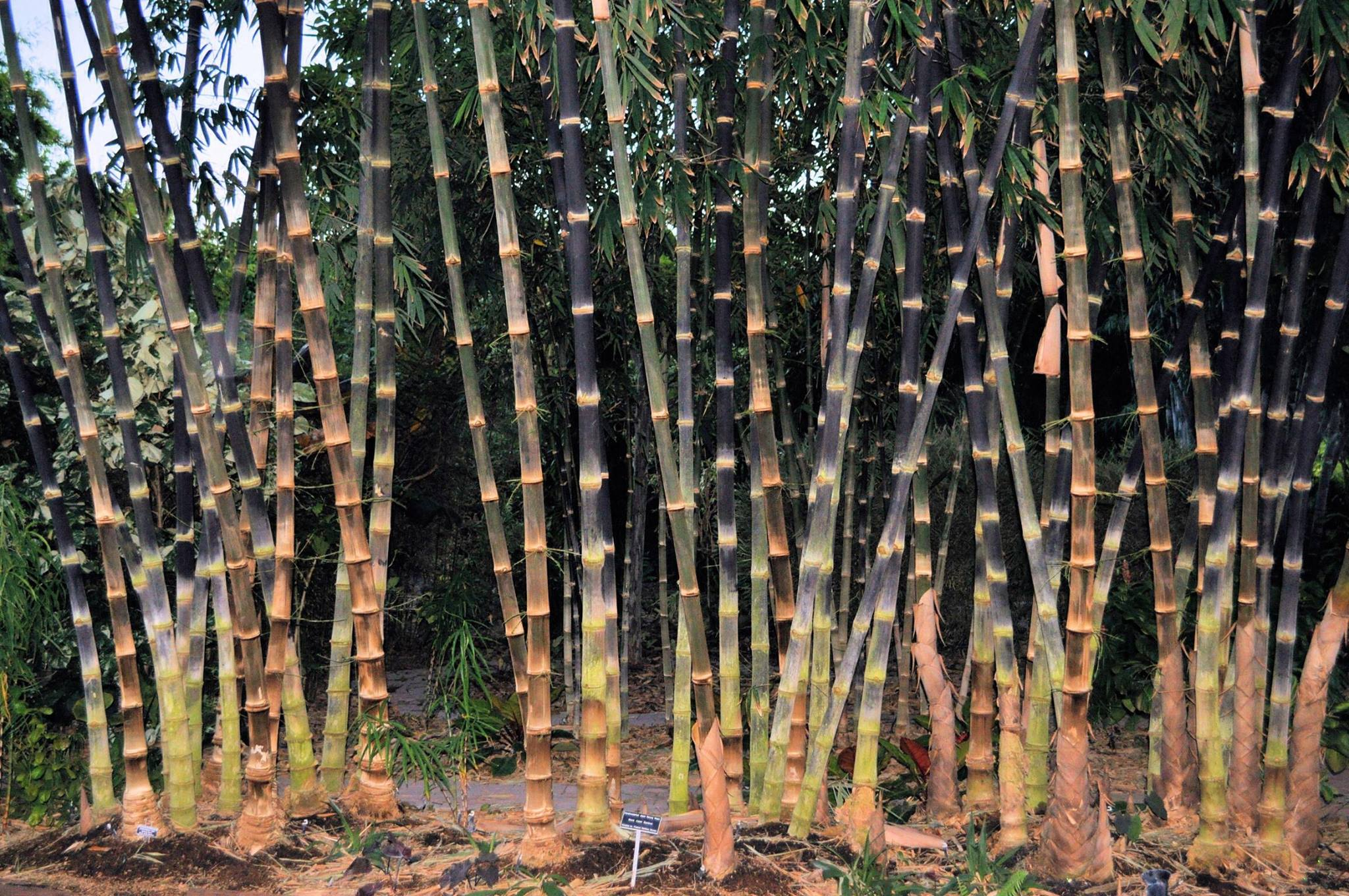 Tropical Bamboo Nursery & Gardens - Loxahatchee Convenience