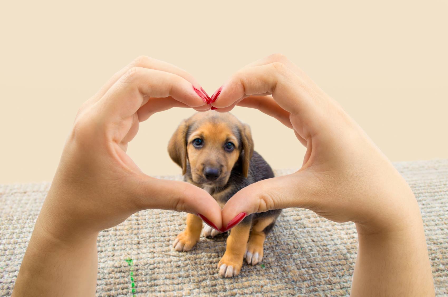 VCA Animal Hospitals - Fort Lauderdale Webpagedepot