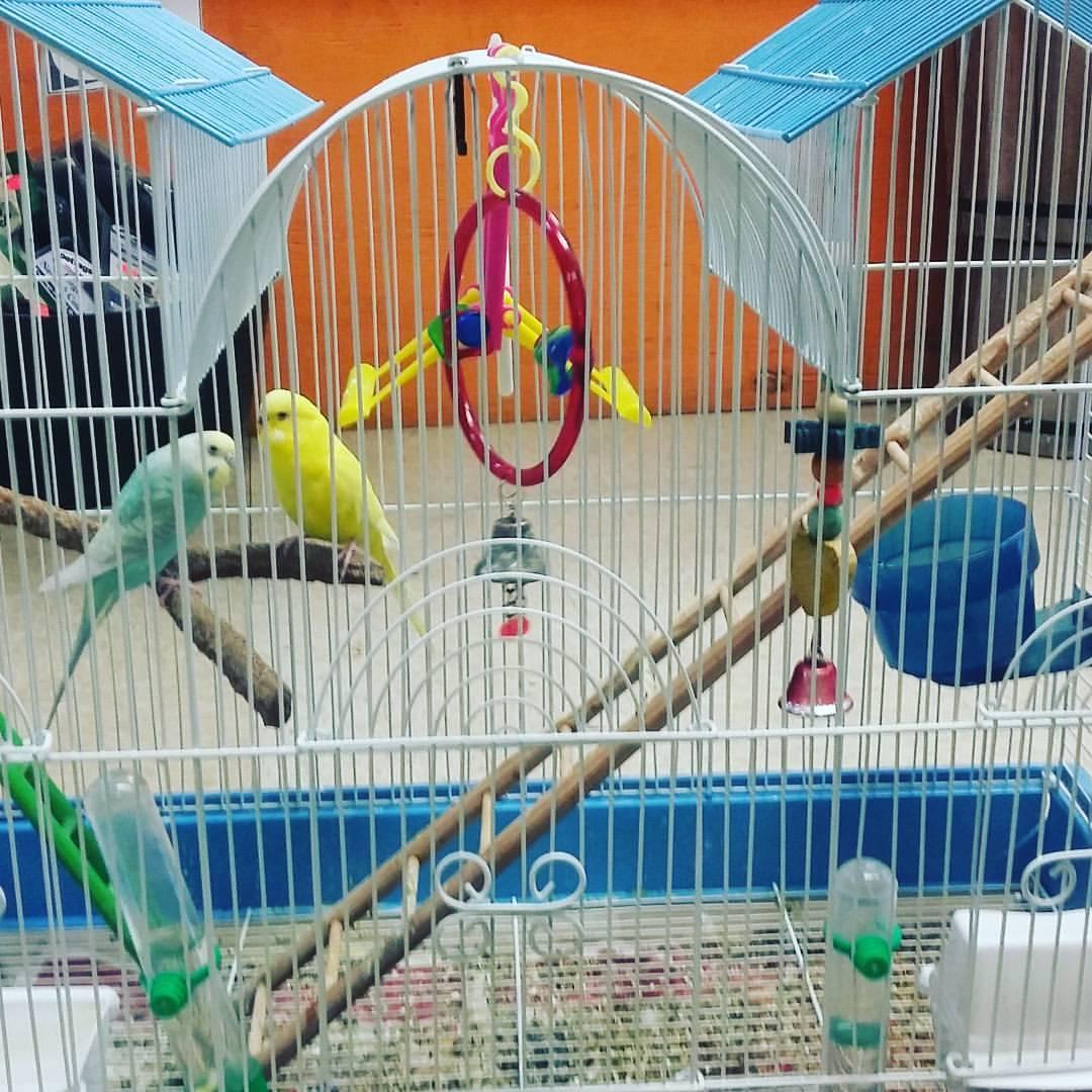 Wild Cargo Pets - West Palm Beach Webpagedepot