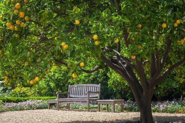 Adam's Plants - West Palm Beach Regulations