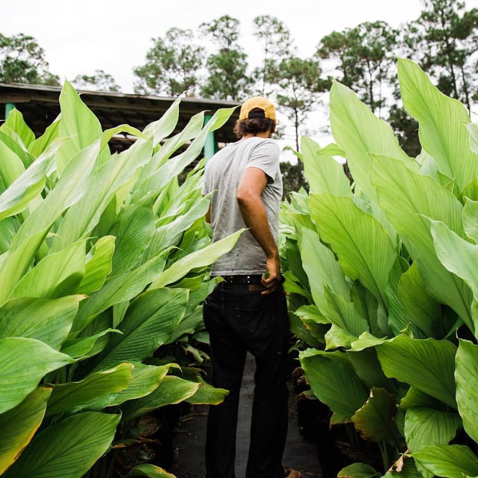 Celis Produce - West Palm Beach Combination