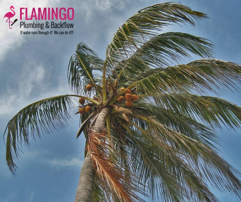 Flamingo Plumbing & Backflow Services Professionals
