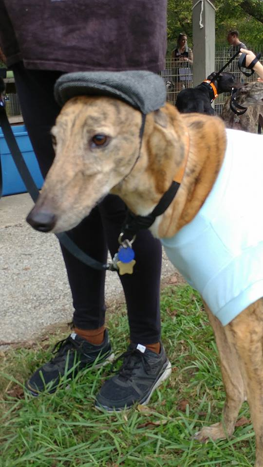 Greyhound Pets of America - West Palm Beach Wheelchairs