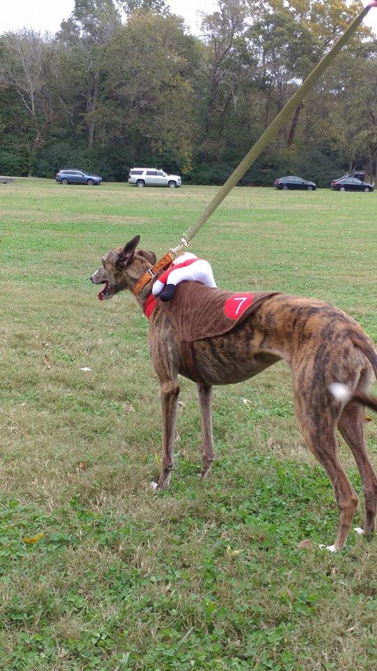 Greyhound Pets of America - West Palm Beach Webpagedepot