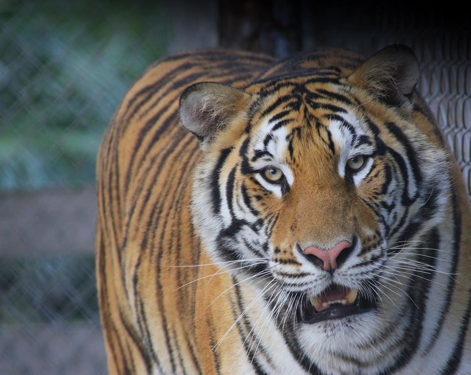 McCarthys Wildlife Sanctuary - West Palm Beach Webpagedepot