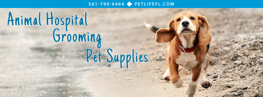 PetLife - West Palm Beach Webpagedepot