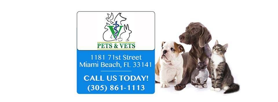 Pets & Vets Animal Clinic - Independence Webpagedepot