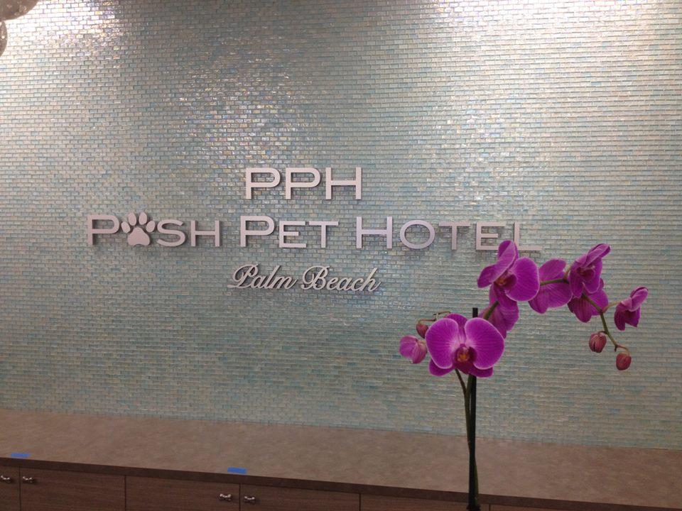 Posh Pet Hotel Slider 3