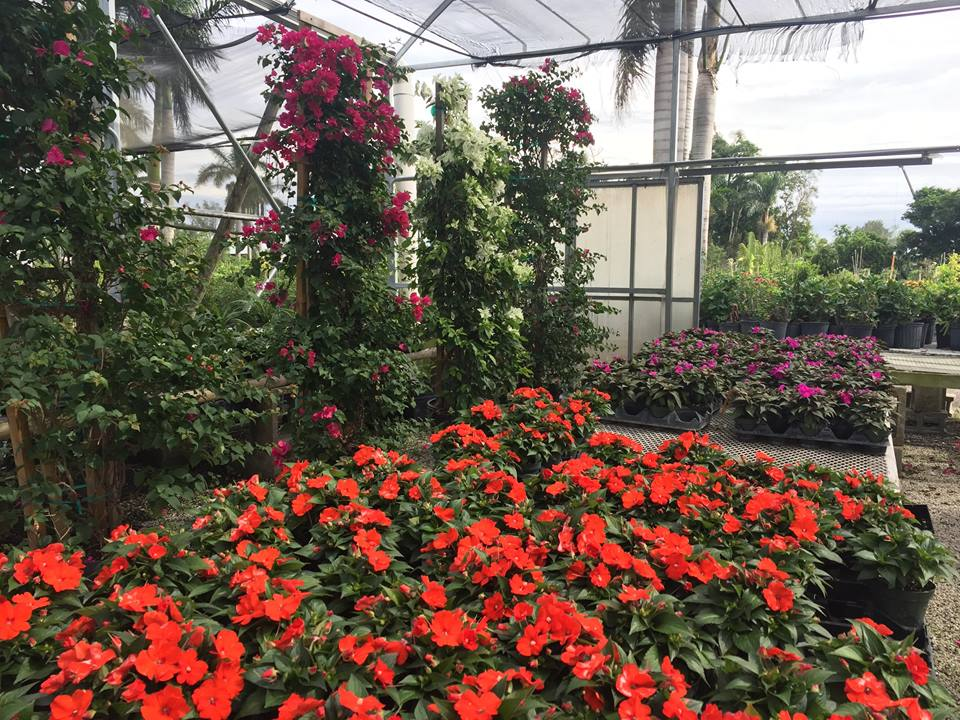 Southern Gardens Nursery Information