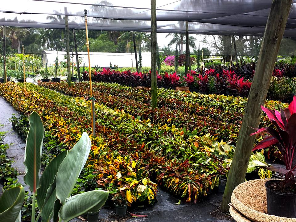 Southern Gardens Nursery - West Palm Beach Webpagedepot