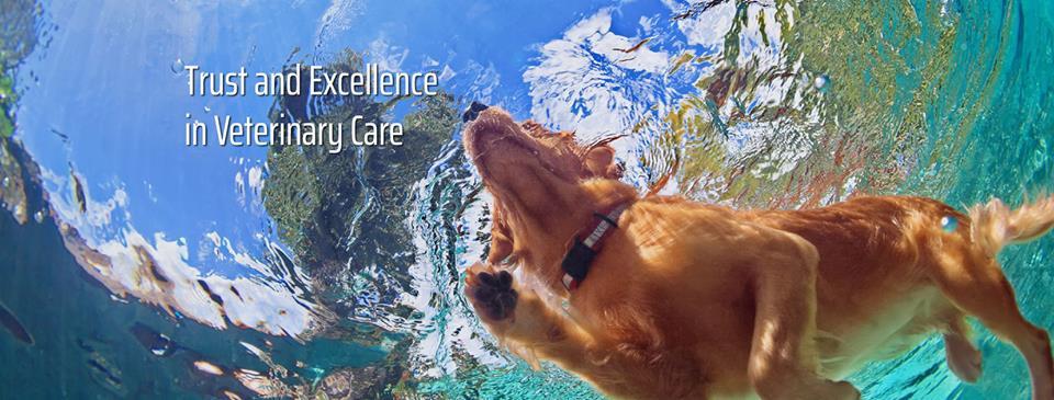 Animal Health Clinic - Jupiter Veterinarians