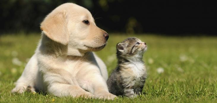 Animal Health Clinic - Jupiter Accessibility