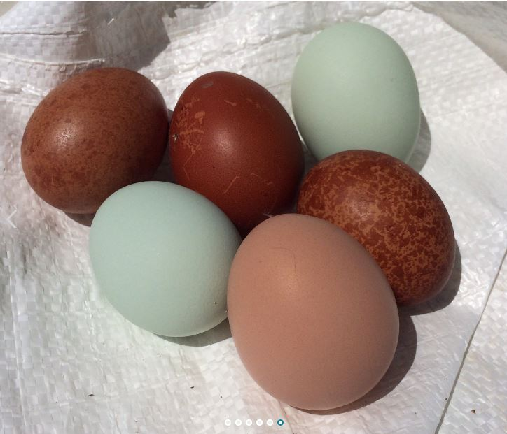 The Fancy Chicken Farm - Lake Worth Webpagedepot