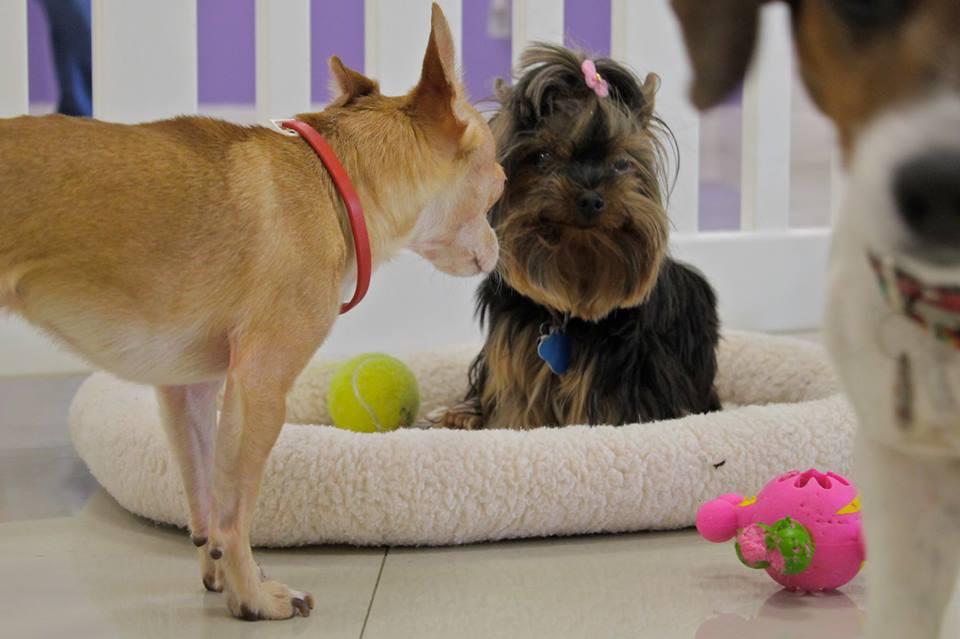 Le Chien Pet SPA Webpagedepot