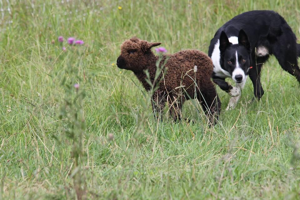 Longfield Farm - Wellington Establishment