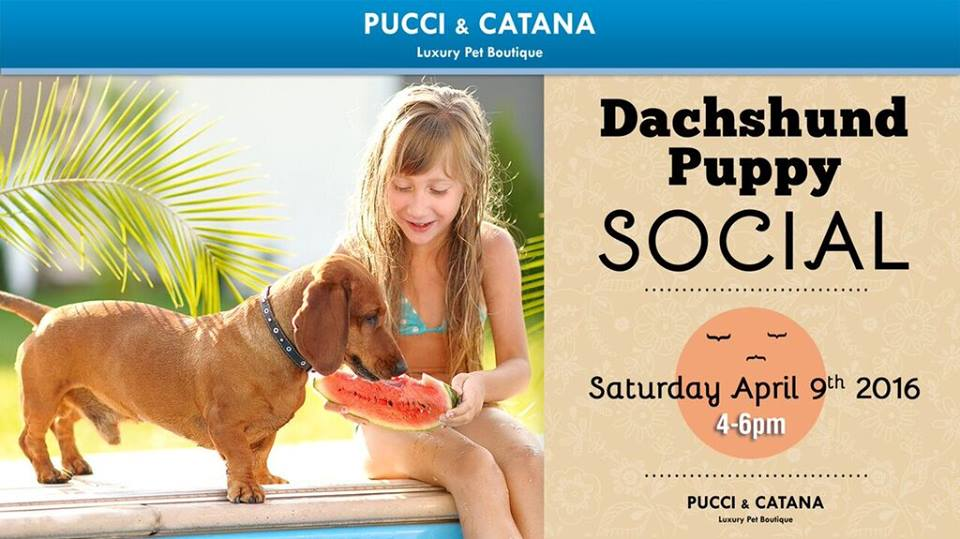 Pucci & Catana Luxury Pet Boutique - Omaha Wheelchairs
