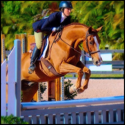 Ravenwood Riding Academy - Wellington Regulations