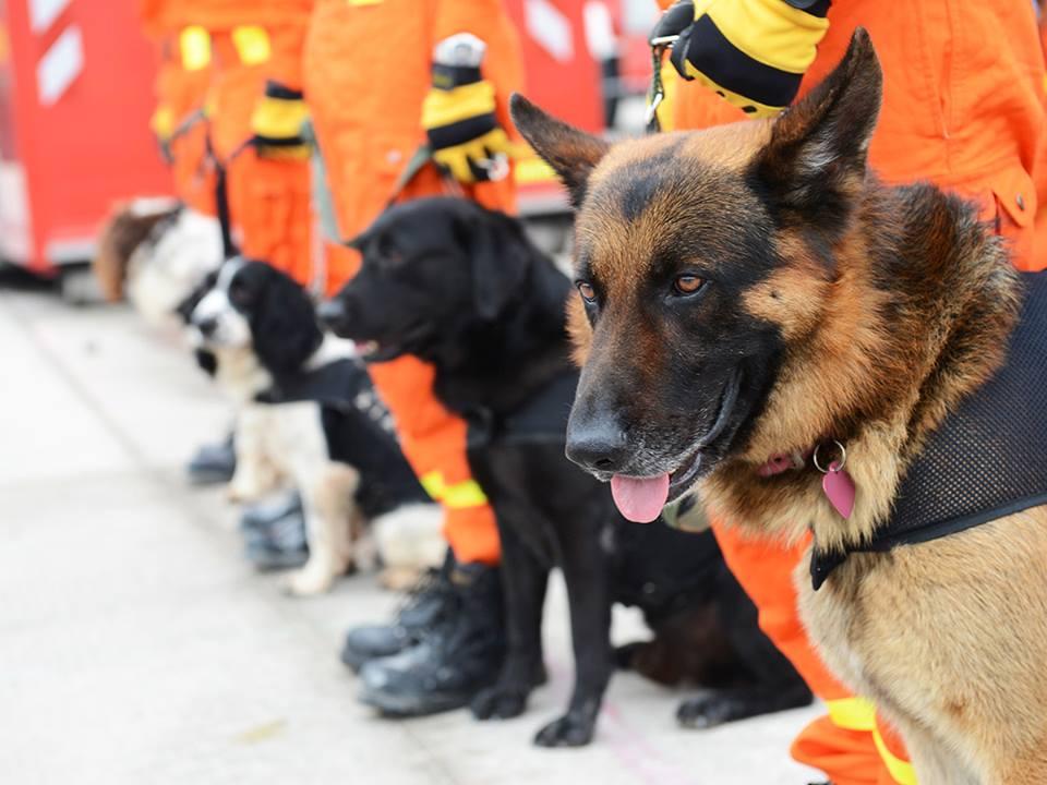 VCA Aventura Animal Hospital & Pet Resort - Aventura Establishment