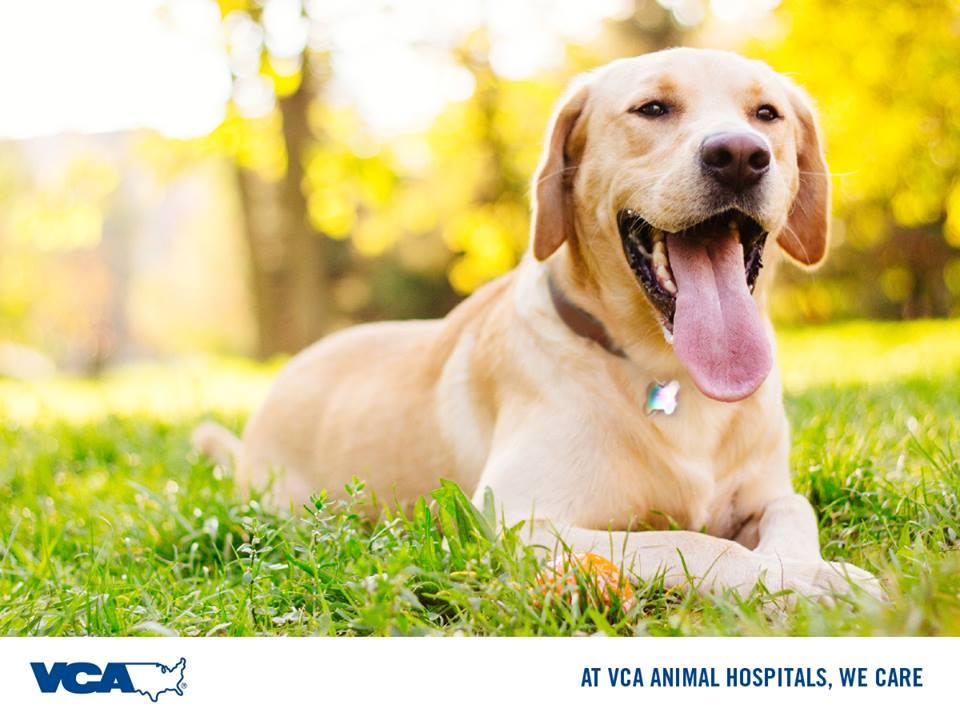 VCA Aventura Animal Hospital & Pet Resort - Aventura Accessibility