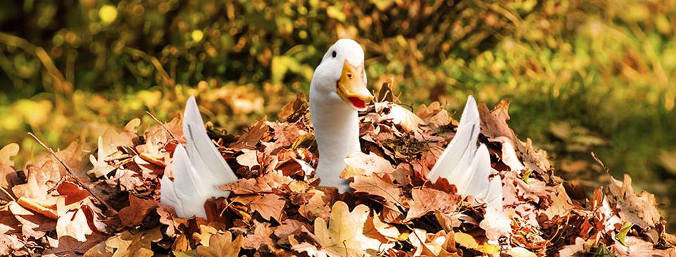 Aflac Insurance Agent - Tequesta Information