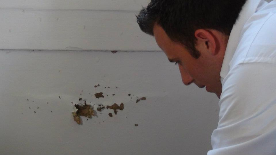 Beach Environmental Pest Control - Riviera Beach Webpagedepot