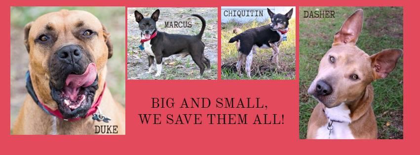 Big Dog Ranch Rescue - Loxahatchee Wheelchairs