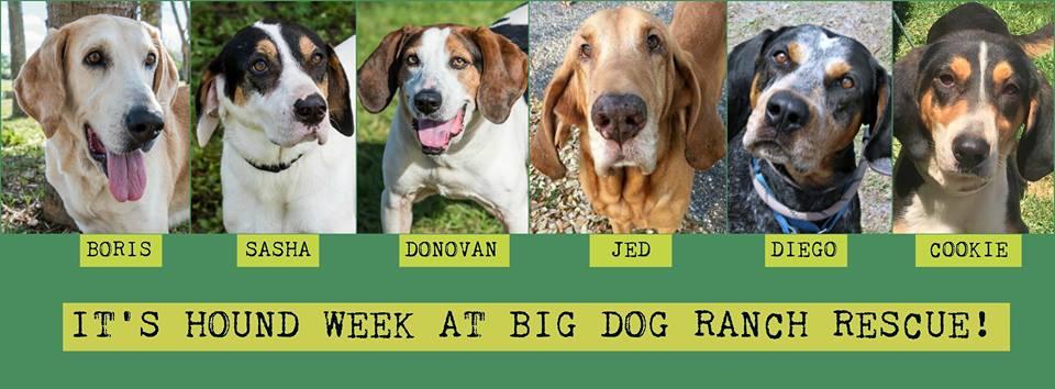 Big Dog Ranch Rescue - Loxahatchee Information