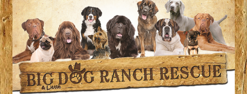 Big Dog Ranch Rescue - Loxahatchee Appointments