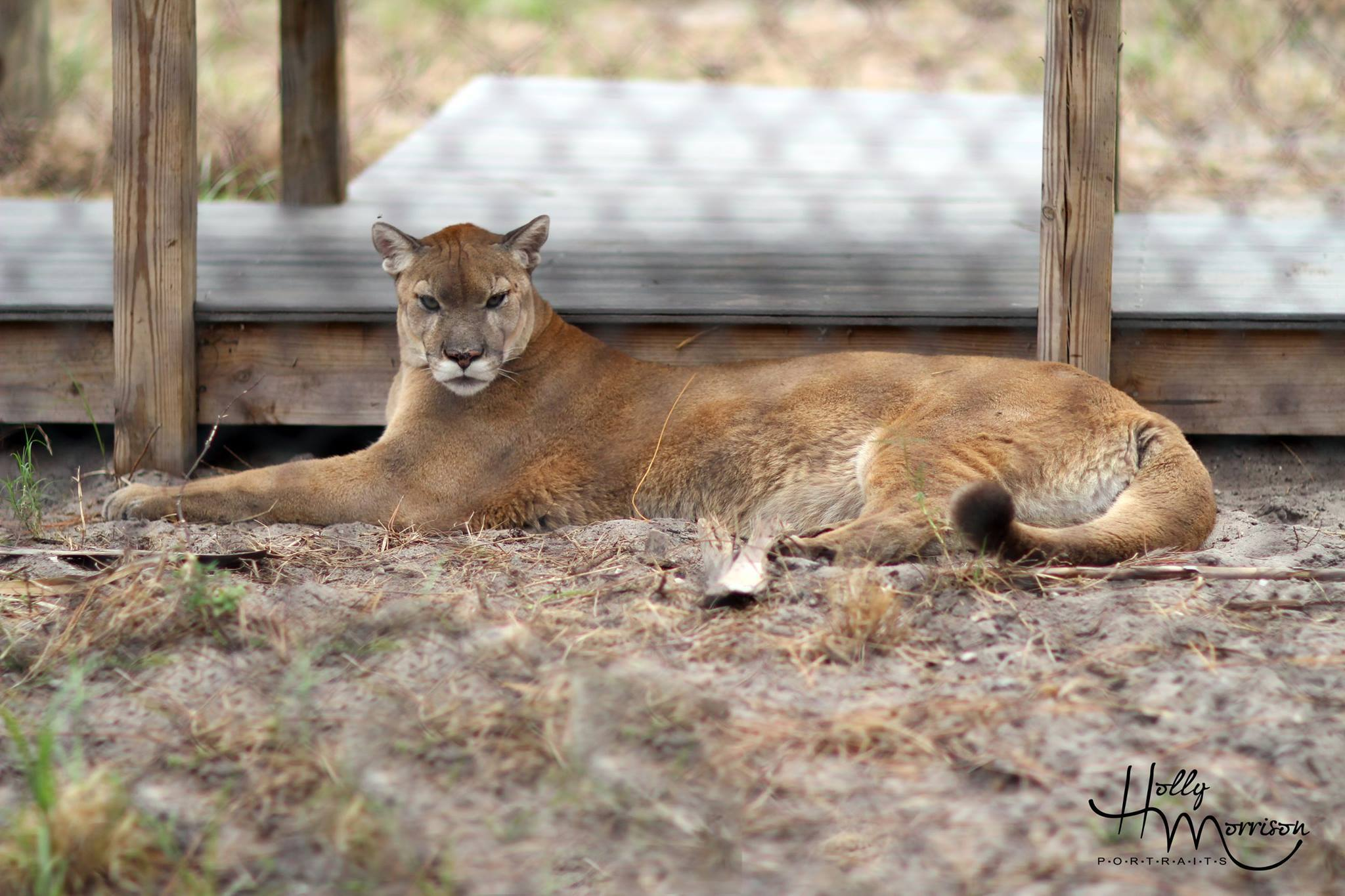 Busch Wildlife Sanctuary - Jupiter Comfortable