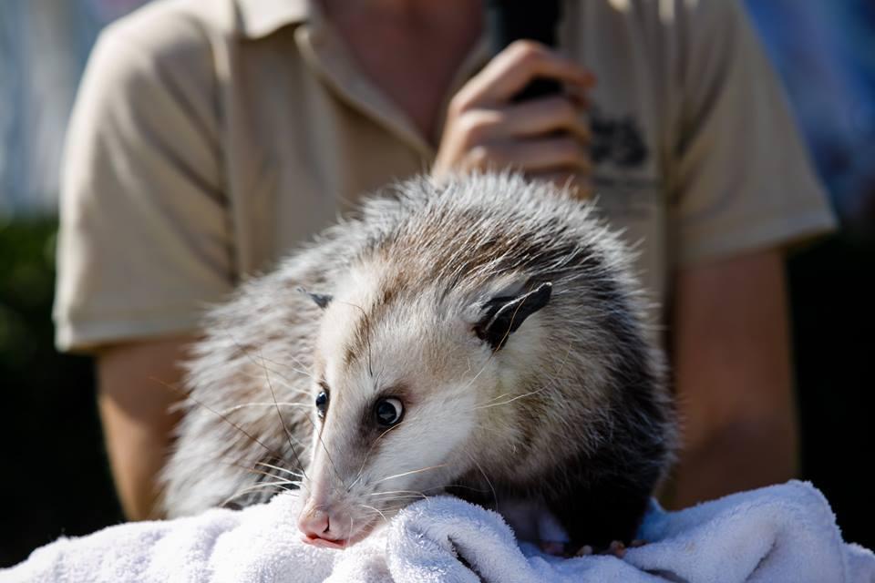 Busch Wildlife Sanctuary - Jupiter Webpagedepot