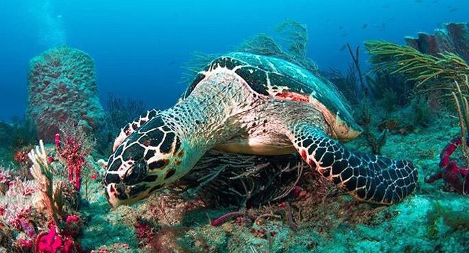 Calypso Dive Charters - Riviera Beach Informative