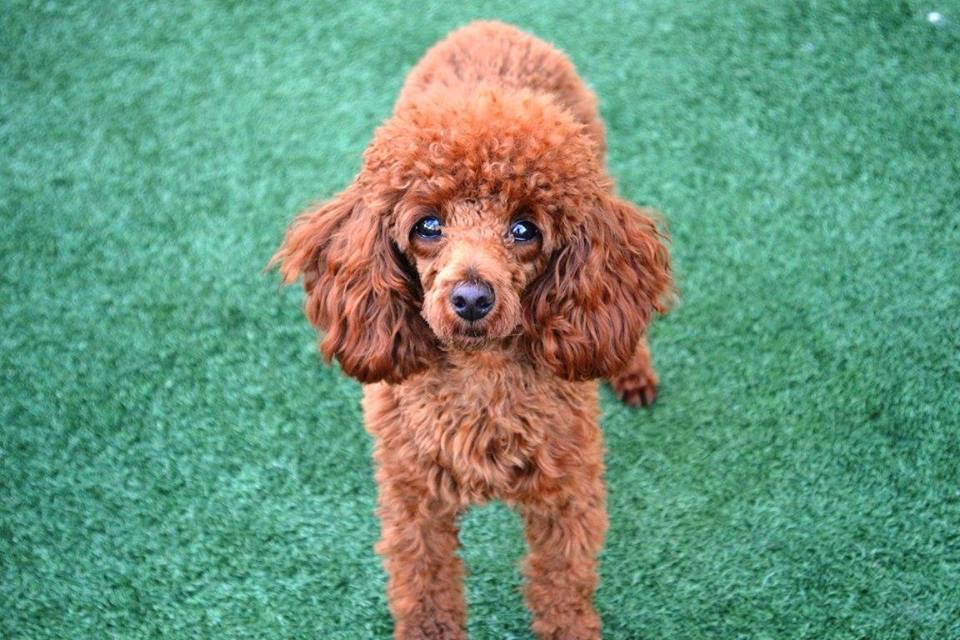 Lush Puppy Pet Resort - Jupiter Slider 5