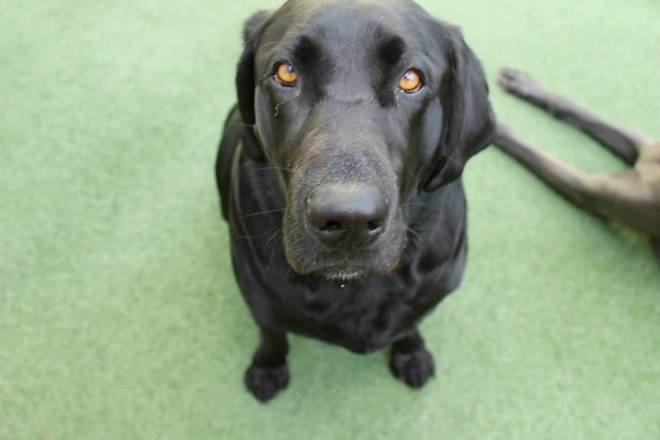 Lush Puppy Pet Resort - Jupiter Slider 4