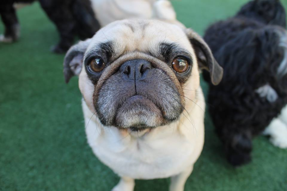 Lush Puppy Pet Resort - Jupiter Slider 1
