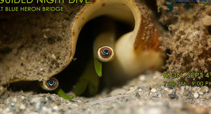 Pura Vida Divers - West Palm Beach Webpagedepot
