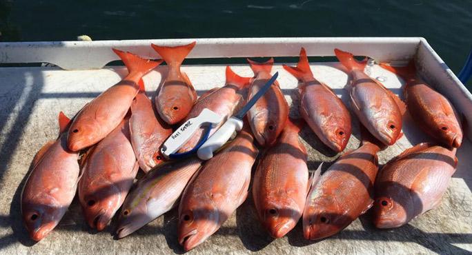 Reel Intense Fishing Charters Webpagedepot
