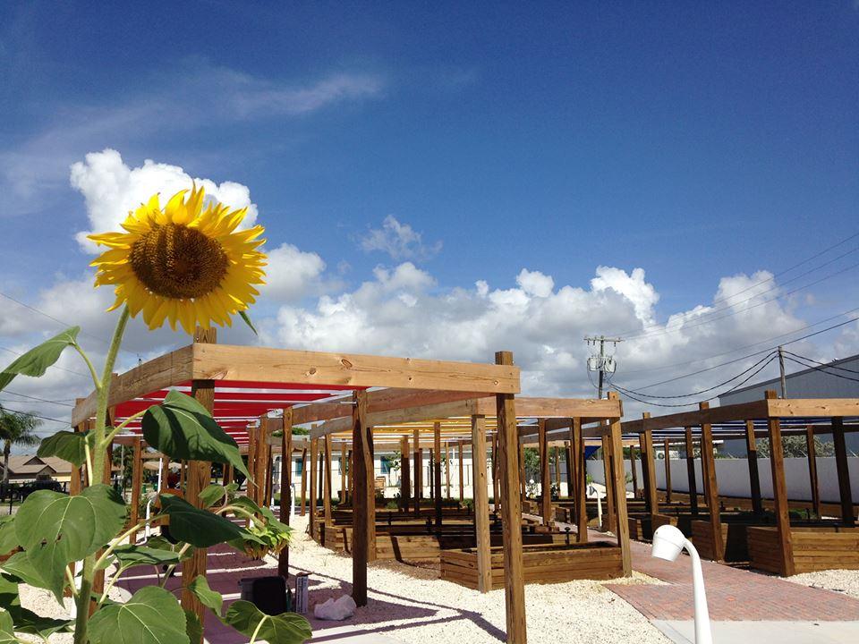Riviera Beach Community Garden - Riviera Beach Appointments