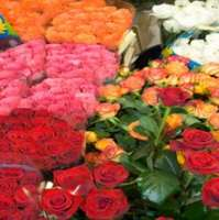 Prairie Petals - Fargo Prairie Petals - Fargo, Prairie Petals - Fargo, 210 Broadway N, #104, Fargo, ND, , florist, Retail - Florist, flowers, plants, outdoor, indoor, , shopping, Shopping, Stores, Store, Retail Construction Supply, Retail Party, Retail Food