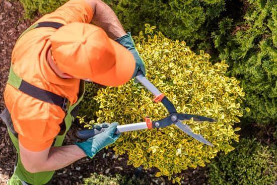 Hernandez Landscaping Positively
