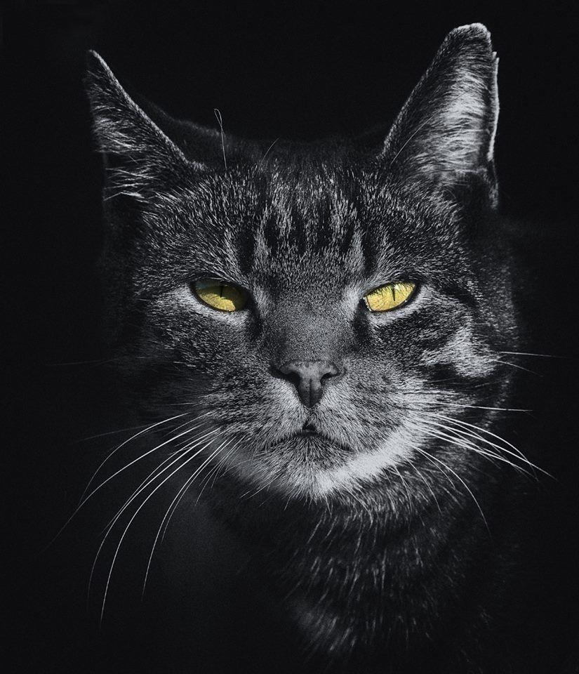 Magic Pet - Orlando Informative