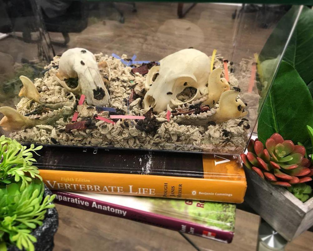 SKELETONS: Museum Of Osteology - Orlando Accommodate